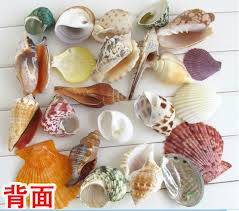 Assorted Seashells Filler Machine Picture More Detailed Picture About 1kg Big