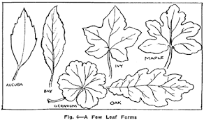 drawing flowers plants weeds and leaves with drawing lessons