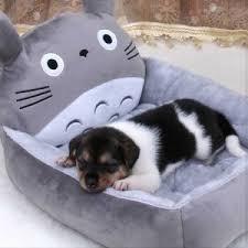 Giant Totoro Bed My Neighbor Totoro Merchandise