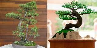 morton arboretum on bonsai is magic in miniature see
