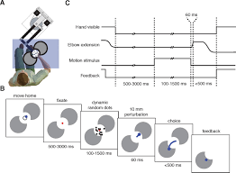 deliberation in the motor system reflex gains track evolving