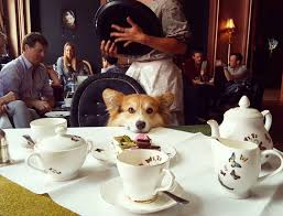 english breakfast corgi