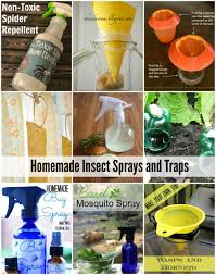 natural homemade insect sprays and traps the idea room