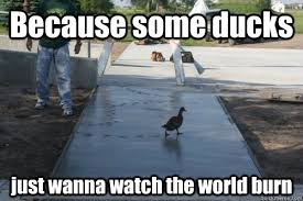 Meme Duck - because some ducks just wanna watch the world burn duck quickmeme