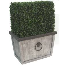 shop unbranded square boxwood topiary at lowe s canada find our