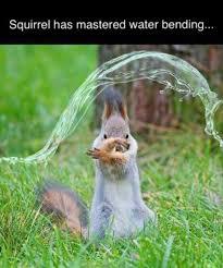 Squirrel Meme - squirrel meme album on imgur