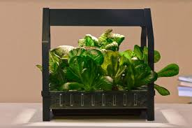 grow vegetables in your bedroom with ikea u0027s new hydroponic planter