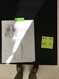 Lab Practical Anatomy And Physiology Anatomy U0026 Physiology S Macmanus Pictures Fool Lab Practical