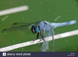 kasten ältest wanzen auf haus stockfoto bild kasten eat small insects stockfotos eat small insects bilder alamy