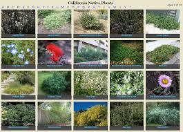 San Diego Landscape by Plant Finder For San Diego County San Diego County Water Authority