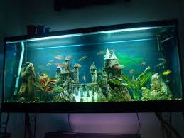 55 gallon aquarium light http www fishlore com aquariummagazine mar12 jaysee 55 gallon