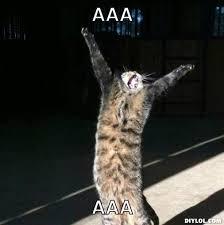 Grumpy Cat Meme Generator - happy cat meme generator cat best of the funny meme