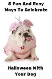 87 best howl o ween images on pinterest costume ideas dog