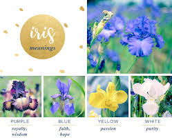 Flowers Colors Meanings - iris meaning and symbolism ftd com