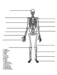 skeleton diagram worksheets skeletons and homeschool