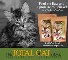 34 best benefits of feeding homemade raw cat food images on