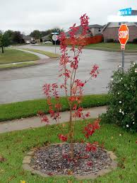 Fall Garden North Texas - north texas u0027 fall color