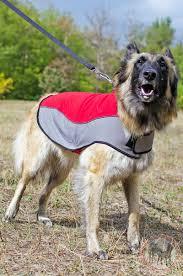 belgian malinois vest warm nylon winter belgain malonois coat for walking comfortable