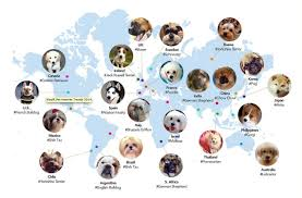 the top trending dog breeds across the world in pictures by