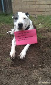 Dog Shaming Meme - science proves that the dog shaming meme is bogus the daily dot
