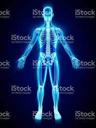 Picture Of Human Anatomy Body The Human Body Pictures Images And Stock Photos Istock