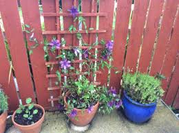ideas for screening on fence gardening forum gardenersworld com