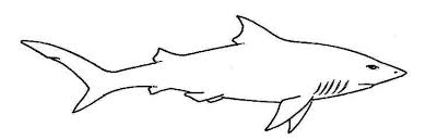 shark images drawings