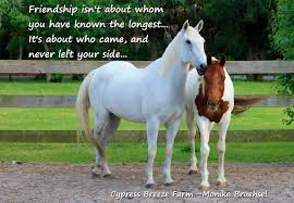 quotes about friendship gone wrong quotes about best friends and horses horse best friend quotes