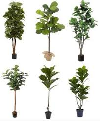 designs by artificial fiddle leaf fig tree fiddle leaf