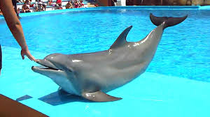 squeaking dolphin youtube