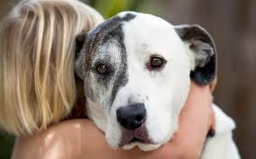 Sad Dog Meme - don t hug your dog it hates it say animal psychologists