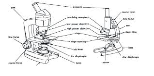 compound light microscope parts and functions diagram parts of a compound light microscope diagram