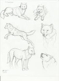 wolf sketches 2 by mtibbs 89 on deviantart