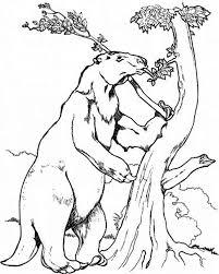 sloth climb tree coloring sloth climb tree coloring