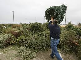 Christmas Tree Pick Up Edmond Exchange For Jan 9 News Ok