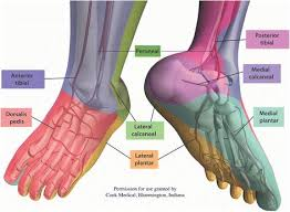Foot Vascular Anatomy 57 Best Dm Foot Images On Pinterest Diabetes Google And Search