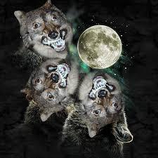 Three Wolf Moon Meme - three wolf moon moon imgur
