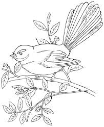 zealand native fantail forest park bird coloring picture