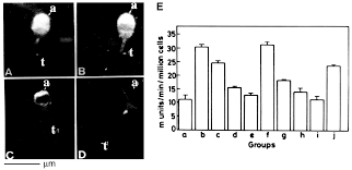 plasma membrane associated glutathione s transferases as