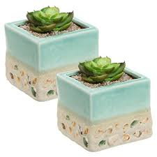 amazon succulents 50 best wants u0026 wishes images on pinterest diffusers succulent