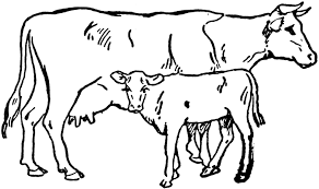 clipart cow have types of cows clip art free sculptured house