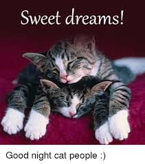 Sweet Dreams Meme - sweet dreams good night cat people meme on me me