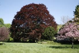 gaffin tree certified arborist consulting arborist blog
