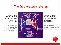 major body system 3 rd grade everything your body can do ppt