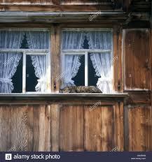 Window Sill Curtains Cat Stripy House Cat Domestic Sleeping Windows Windowsill Outside