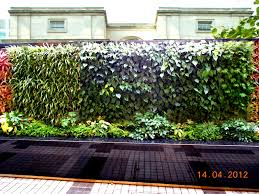 garden wall plants interiors and landscape garden and landscape one stop centre