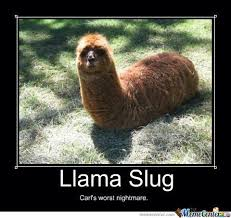 Alpaca Meme - unique alpaca meme just another llama slug by recyclebin meme center