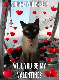 Will You Be My Valentine Meme - will you be my valentine cat happy valentine s day