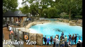 travel and sightseeing london zoo wildlife tour experience