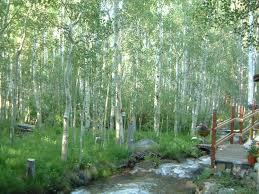 aspen forest hilton creek